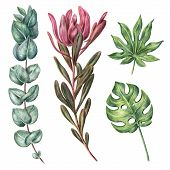 Set Of Tropical, Exotic Plants - Monstera, Palm Leaf, Protea And Eucalyptus, Hand-drawn With Colored poster
