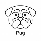 Pug Linear Icon. Thin Line Illustration. Mops. Companion Dog Breed. Contour Symbol. Vector Isolated  poster