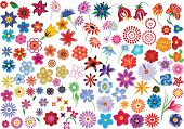 Set of colorful vector floral elements - flowers