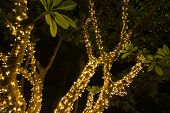 Decorative Outdoor String Lights Hanging On Tree In The Garden At Night Time - Decorative Christmas  poster