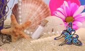 pic of sanddollar  - Sea Shells With Flower and Jewelry on Sand With Water Reflection - JPG