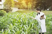 Biotechnology Woman Engineer Examining Plant Leaf For Disease, Science And Research Concept poster