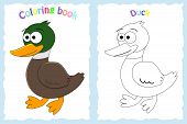 Coloring Book Page For Preschool Children With Colorful Duck And Sketch To Color poster