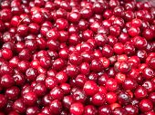 Red Ripe Cherry Close Up. View On Pile Of Red Cherry. Heap Of Red Berries Closeup. Ripe Cherry Piled poster