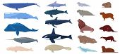 Sea Mammal Vector Water Animal Character Dolphin Walrus And Whale In Sealife Or Ocean Illustration M poster