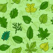 Leaf Vector Green Leaves Of Trees Leafed Oak And Leafy Maple Or Leafing Foliage Illustration Of Leaf poster