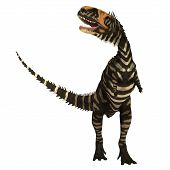 Rajasaurus Dinosaur On White 3d Illustration - Rajasaurus Was A Carnivorous Theropod Dinosaur That L poster