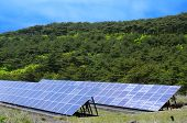 Solar power and forest