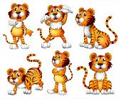 picture of tigers  - Illustration of the six positions of a tiger on a white background - JPG
