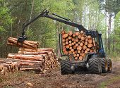 stock photo of logging truck  - The harvester working in a forest - JPG