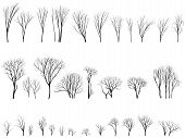 picture of willow  - Set of vector silhouettes of trees and bushes without leaves during the winter or spring period - JPG
