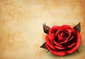 image of rosa  - Big red rose on old paper background - JPG