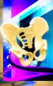 image of girdle  - Digital illustration  of pelvic girdle in    colour background - JPG