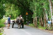 Farmer Riding Buffalo Cart On Country Road