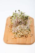 stock photo of soybean sprouts  - The healthy diet - JPG