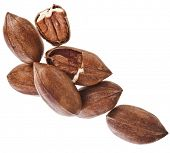 stock photo of pecan  - Pecan nuts pile heap close up - JPG