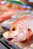 picture of red snapper  - Lapu - JPG