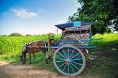 pic of great horse  - The horse carriage - JPG