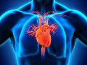 stock photo of cardiology  - Illustration of Human Heart Anatomy - JPG