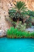 pic of tozeur  - Little pond in Chebika oasis at border of Sahara Tunisia Africa