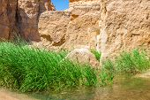stock photo of tozeur  - Famous Mountain oasis Chebika in Tunisia Northern Africa - JPG