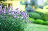 picture of horticulture  - Beautiful landscaping in garden - JPG