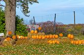 image of scarecrow  - Autumn Display of Pumpkins and Scarecrow for Halloween - JPG
