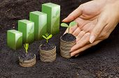 stock photo of environmentally friendly  - hands holding tress growing on coins in germination sequence  - JPG