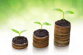 stock photo of sustainable development  - trees growing on coins  - JPG
