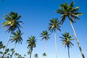 picture of tree trim  - Palm tree on the sky - JPG