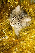 pic of yellow tabby  - Cute tabby cat in Christmas yellow tinsel holiday background - JPG