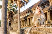 foto of krishna  - monkey portrait - JPG