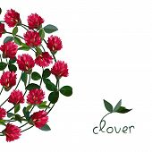 stock photo of red clover  - Vector floral frame with clover red flowers - JPG