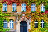 stock photo of vines  - Vine covered building facade in Berlin - JPG
