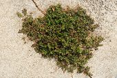 foto of survival  - Small plant growing and survive from the crack concrete - JPG