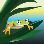 pic of amphibious  - Frog sitting on a leaf in the swamp vector illustration - JPG