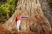 image of redwood forest  - Woman embraces big tree in Redwood California during summer sunny day - JPG