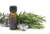 Fresh blossoming rosemary branch and a bottle of essential oil used for aroma therapy