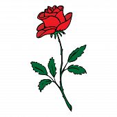 Rose Flower Icon. Vector Illustration Of A Beautiful Rose. Hand Drawn Rose. poster