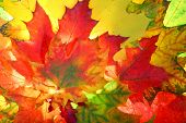 stock photo of fall leaves  -   Autumn fall leaves - JPG