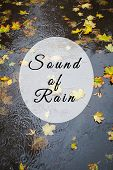 Sound Of Rain.text.puddle, Wet Autumn Leaves. poster