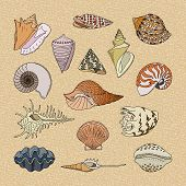 Shells Vector Marine Seashell And Ocean Cockle-shell Underwater Illustration Set Of Shellfish And Cl poster