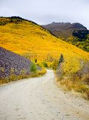 pic of colorado high country  - Path leads to Colorado hillside ablaze with yellow aspen - JPG