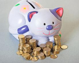 picture of obeah  - blue cat  - JPG