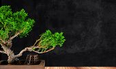 stock photo of juniper-tree  - bonsai tree juniper class on a wooden platform - JPG