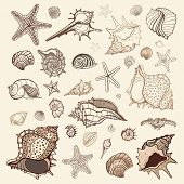 stock photo of starfish  - Sea shells collection - JPG