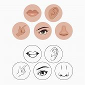 image of ear  - five senses - JPG