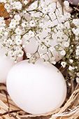 pic of dainty  - Three plain white undecorated Easter eggs nestling in a straw nest with a delicate dainty spray of Babys Breath flowers to celebrate springtime and the Easter holiday - JPG