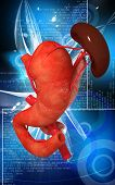foto of pancreas  - Digital illustration of  pancreas and spleen  in colour  background - JPG