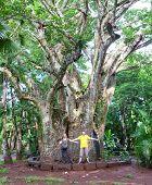 image of baobab  - Tourists near a large baobab  - JPG